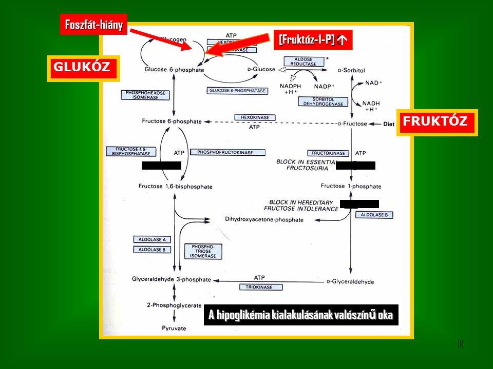 Foszfát-hiány [Fruktóz-1-P] á GLUKÓZ FRUKTÓZ A hipoglikémia kialakulásának valószínű oka